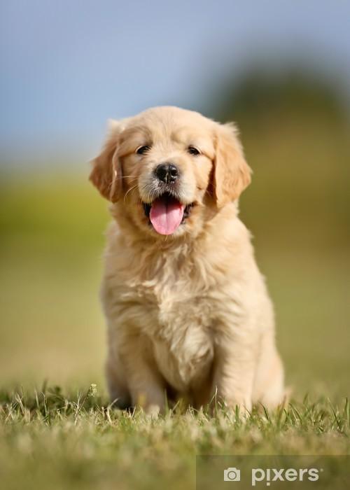 Cute golden retriever puppy Sticker - Pixerstick