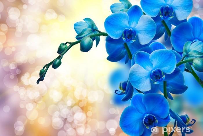 Fototapeta winylowa Kwiat orchidei - Tematy