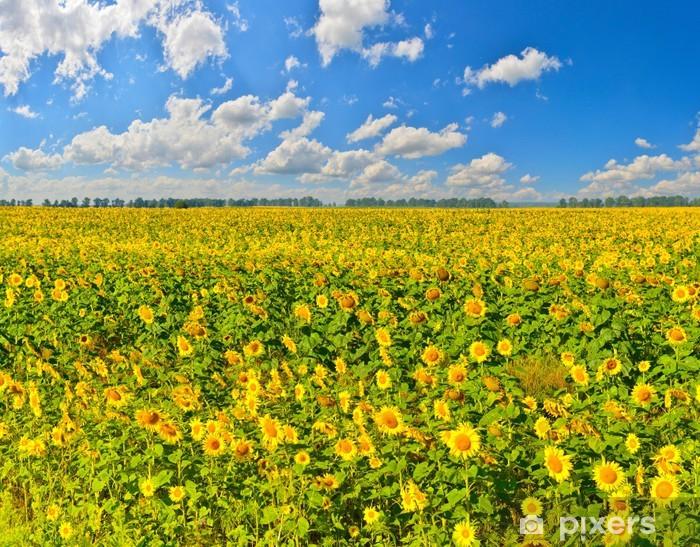 Naklejka Pixerstick Pole słonecznika - Krajobraz wiejski