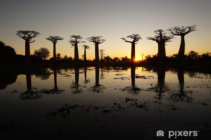 Fotomural Estándar Callejón de los Baobabs - Temas