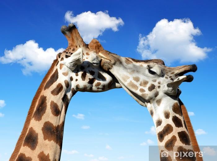Papier peint vinyle Aimer girafes - Thèmes