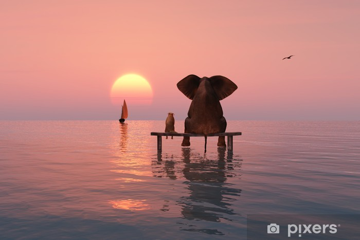 Fototapeta winylowa Słoń i pies siedzi w środku morza - Słonie