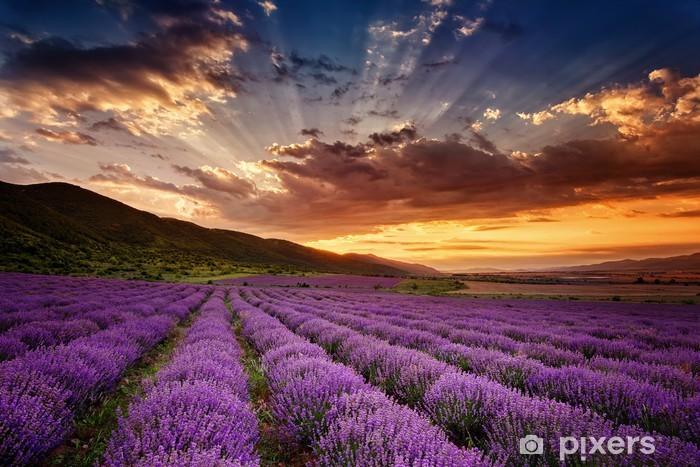 Naklejka Pixerstick Wspaniały krajobraz z lawendowego pola na wschód słońca - Tematy