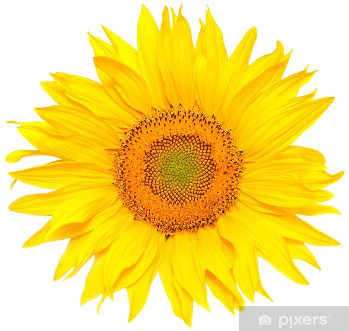 Sticker Pixerstick Tournesol - Fleurs