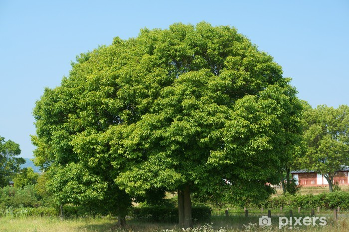 Nálepka Pixerstick 大 き な 樹木 - Asie