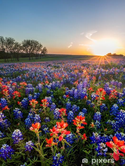 Afwasbaar Fotobehang Bluebonnet en de Indiase penseel wilde bloemen ingediend, Texas - Thema's