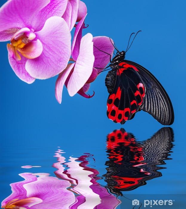 Naklejka Pixerstick Egzotyczny motyl siedzi na niebieskim tle orchidei - Tematy