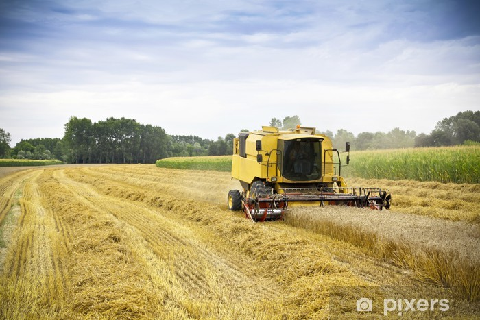 Combine harvests wheat on a field Vinyl Wall Mural - Agriculture