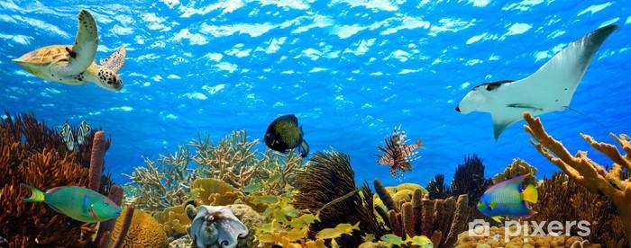 Papier peint vinyle Panorama sous-marine d'un récif tropical dans les Caraïbes - Thèmes