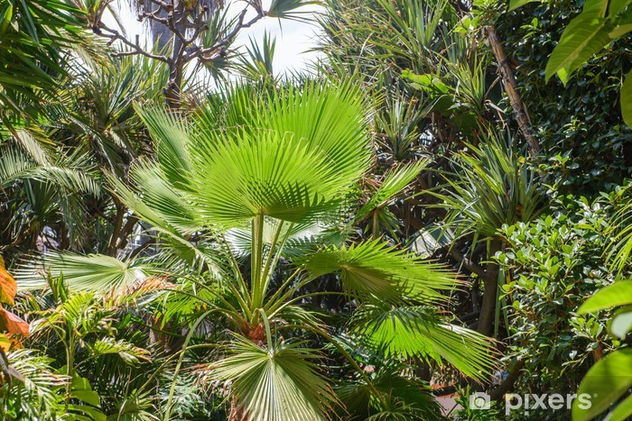 Sticker Pixerstick Vegetation tropicale - Plantes