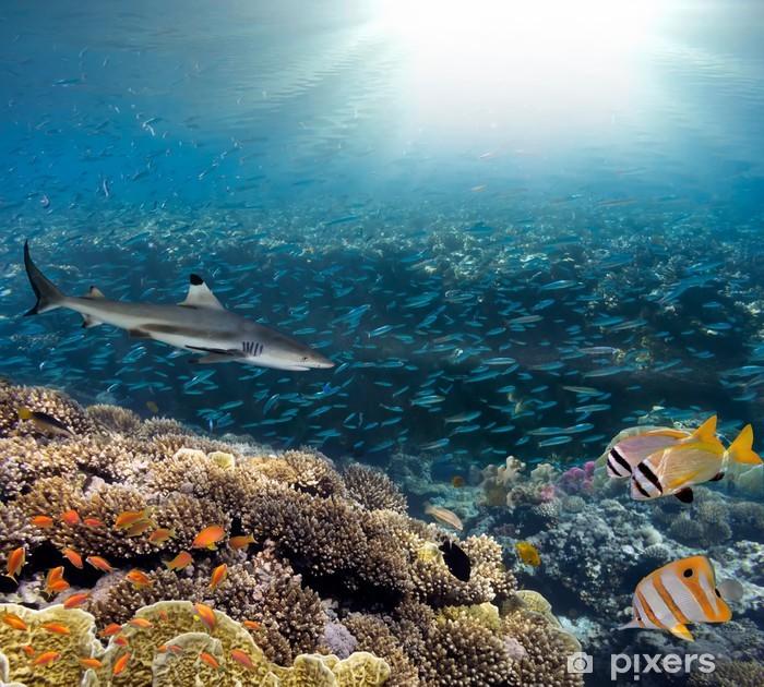 Vinilo Pixerstick Mar u océano de coral bajo el agua arrecife - Arrecife de coral
