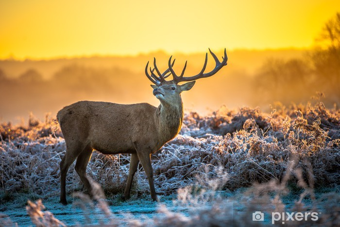 Fototapeta samoprzylepna Czerwony jeleń w zimowej aurze - Tematy