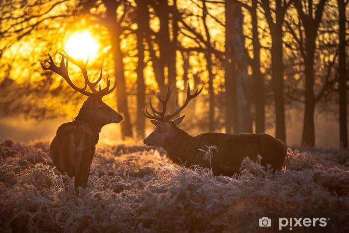 Fotomural Estándar Red deer - Temas