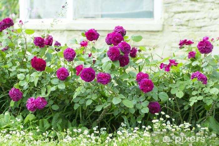 Naklejka Pixerstick Róża kwiat łóżko - Kwiaty