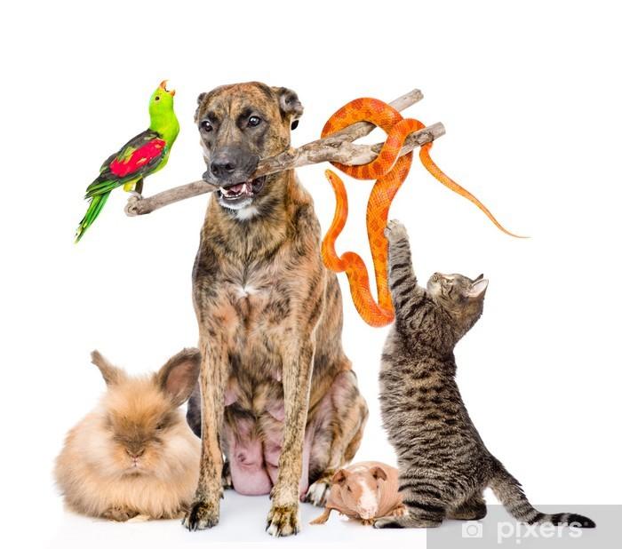 Fototapeta winylowa Zabawna grupa różnych zwierząt. na białym tle - Ssaki