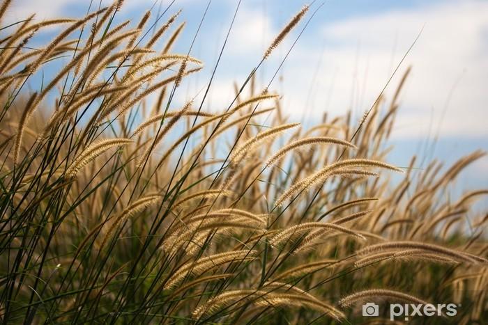 Fotomural Estándar Flor Pennisetum - Plantas