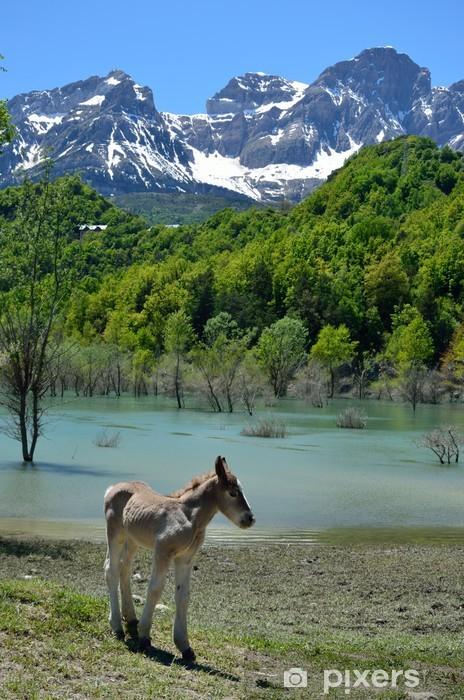 Papier peint vinyle Poulain dans la montagne de printemps - Agriculture