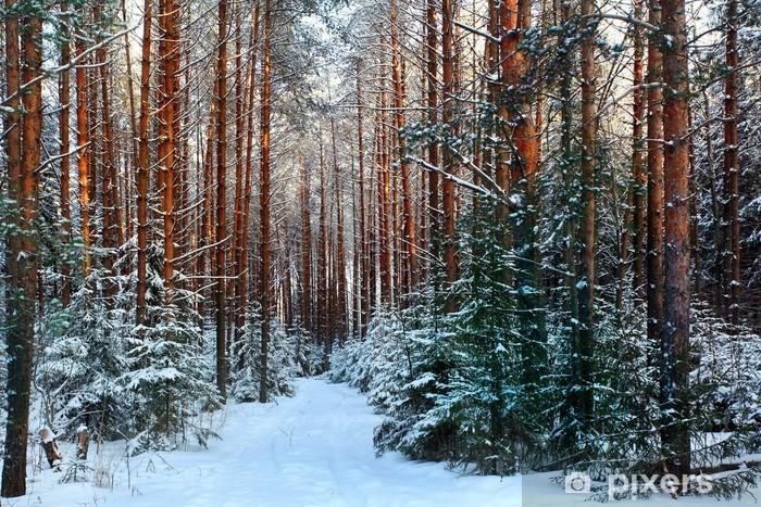 pine forest, winter, snow Pixerstick Sticker - Themes