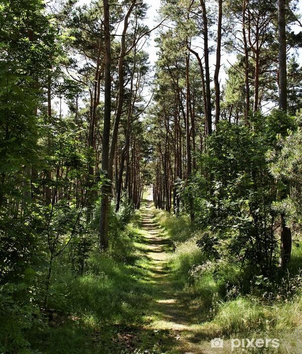 Naklejka Pixerstick Dróżka w lesie - Pory roku