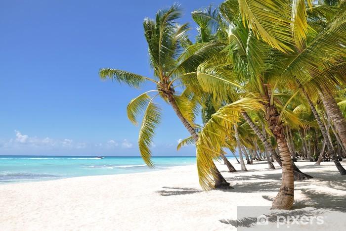 Fototapeta winylowa Palmy i tropikalna plaża - Palmy