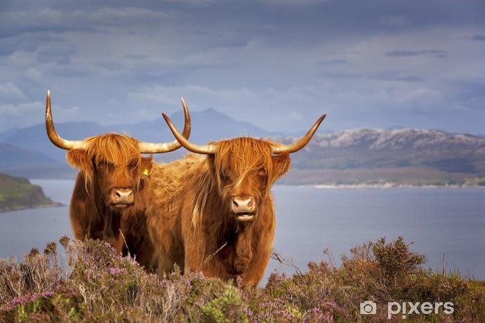 Pixerstick Aufkleber Scottish Kuh IV - Urlaub