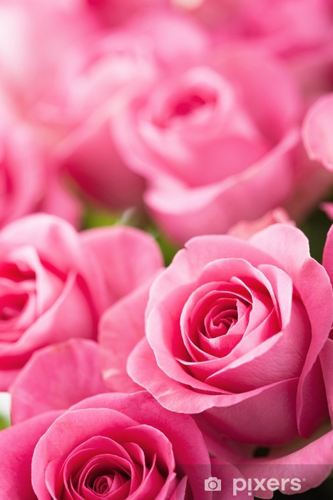 Beautiful Pink Rose Flowers Background Sticker Pixers We Live