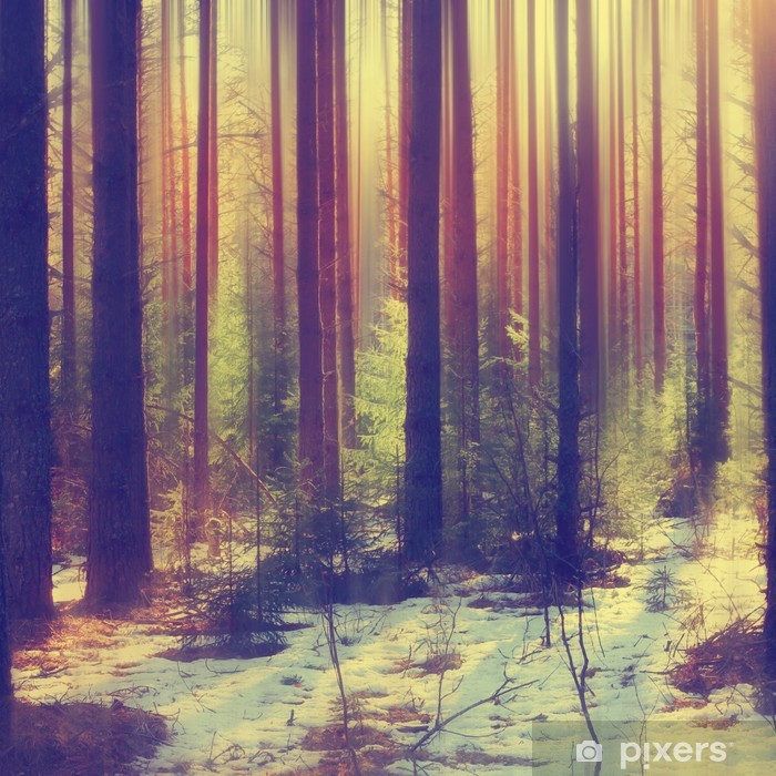 snow in the forest Vinyl Wall Mural - Other
