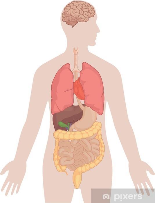 lunger og hjerte