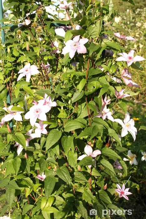 Fotomural Estándar Hermosas flores de color rosa en un jardín dacha - Casa y jardín