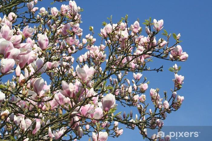 Naklejka Pixerstick Kwitnące drzewo magnolia - Tematy