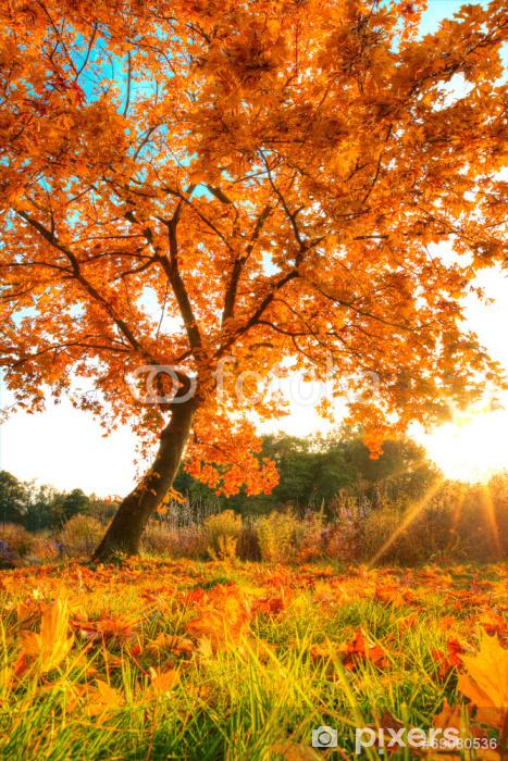Papier peint vinyle Bel arbre d'automne avec des feuilles sèches tombées - Thèmes