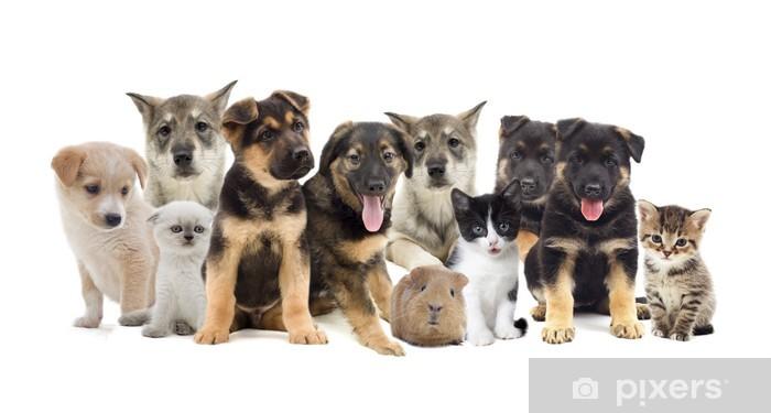 Bureau- en Tafelsticker Groep huisdieren - Gezondheid en Geneeskunde