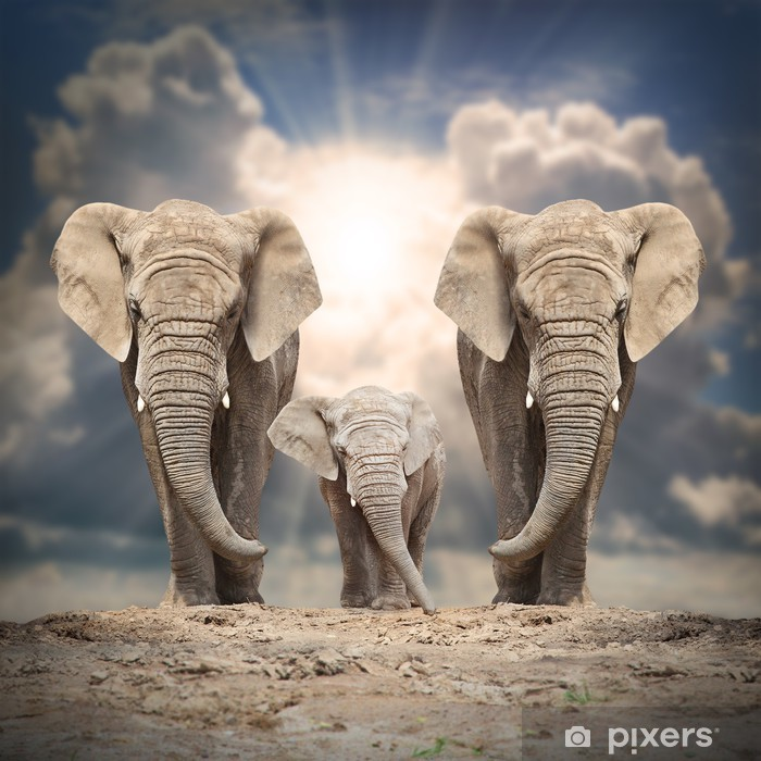 African elephant family on the road. Vinyl Wall Mural - Themes