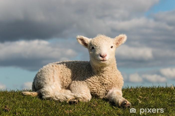 Papier peint vinyle Dorer petit agneau - Mammifères