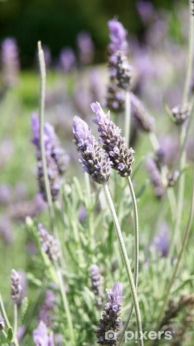 96 flor de lavanda youtube lavanda la flor de la relajaci n buro 24 7 lavanda artificial - Verdecora macetas ...