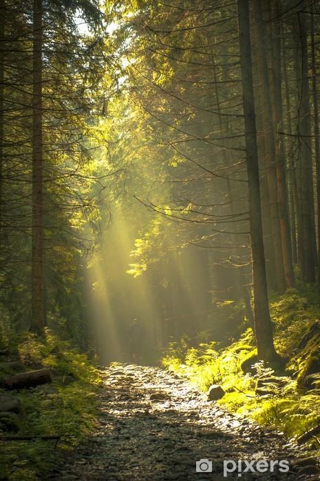 Carta da Parati in Vinile Bella mattina nella foresta con raggi di sole. - Libertà