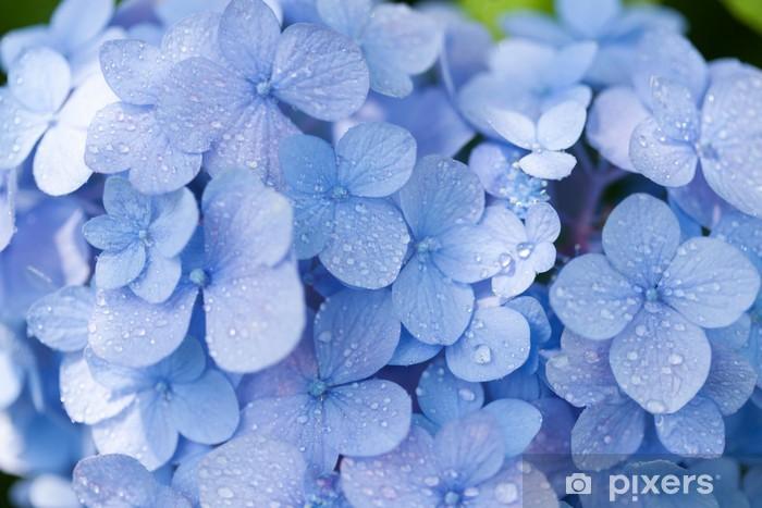 Fototapeta winylowa Kwiaty hortensji - Kwiaty