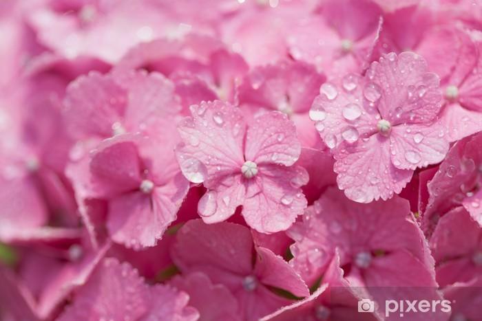 アジサイの花 Pixerstick Sticker - Flowers