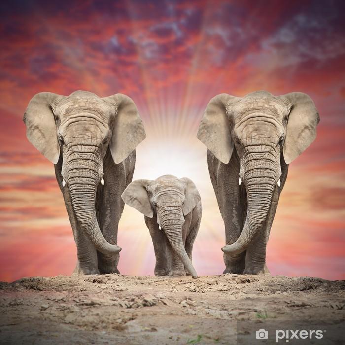 Fototapeta winylowa Afrykańska rodzina słoń na drodze. - Tematy