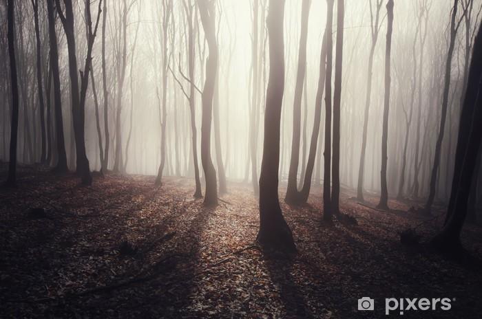 Fototapeta winylowa Las z promieni słońca świecące przez drzewa - Tematy