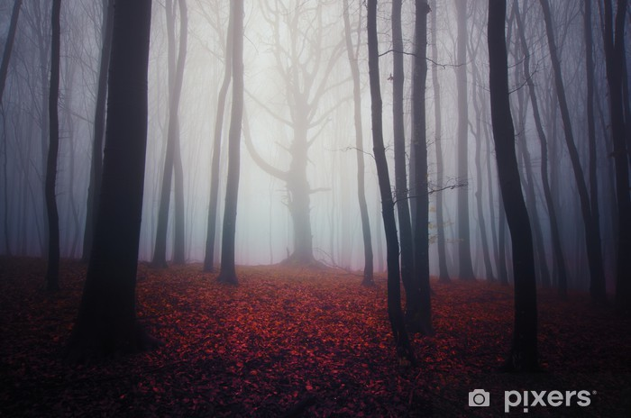 Naklejka Pixerstick Mglisty krajobraz las z kolorowych liści na ziemi - Inne pejzaże