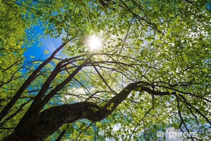 Vinyl-Fototapete Strahlen der Sonne - Jahreszeiten