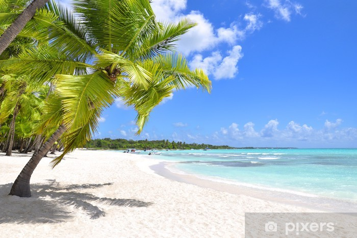 Fototapeta winylowa Palmy i tropikalna plaża - Przeznaczenia