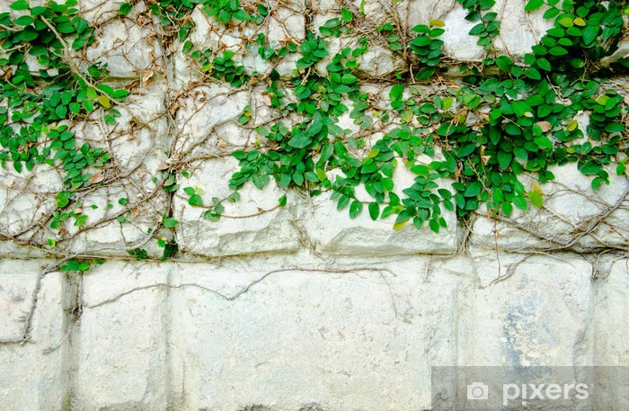 Carta da Parati in Vinile La Pianta rampicante verde - Piante