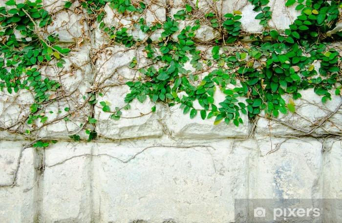 Papier peint vinyle La Plante grimpante Vert - Plantes
