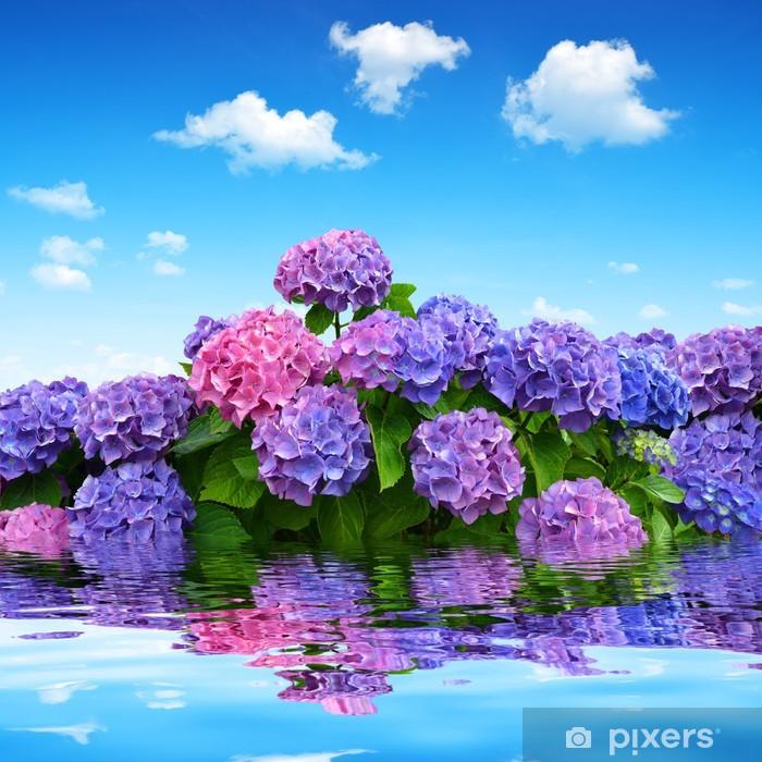 Fototapeta winylowa Hortensja kwiaty na błękitnym niebie - Kwiaty