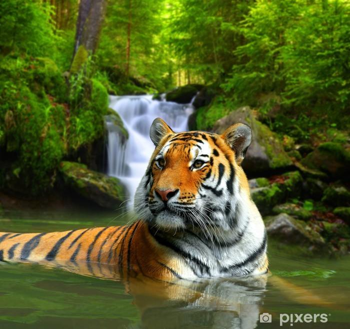 Vinyl Fotobehang Siberische tijger in het water - Thema's