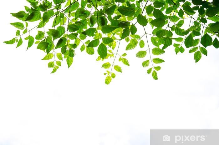 Papier Peint Feuille Verte Isolee Sur Fond Blanc Pixers Nous