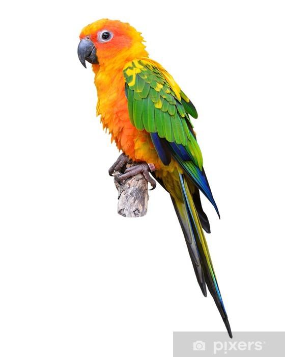 Wall Mural - Vinyl Sun Conure parrot bird