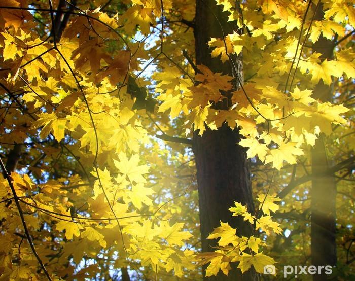Vinylová fototapeta Podzimní žluté listy - Vinylová fototapeta